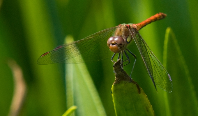 Common darters and Emeralds a plenty