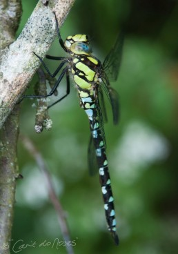 Southern Hawker 2 lo