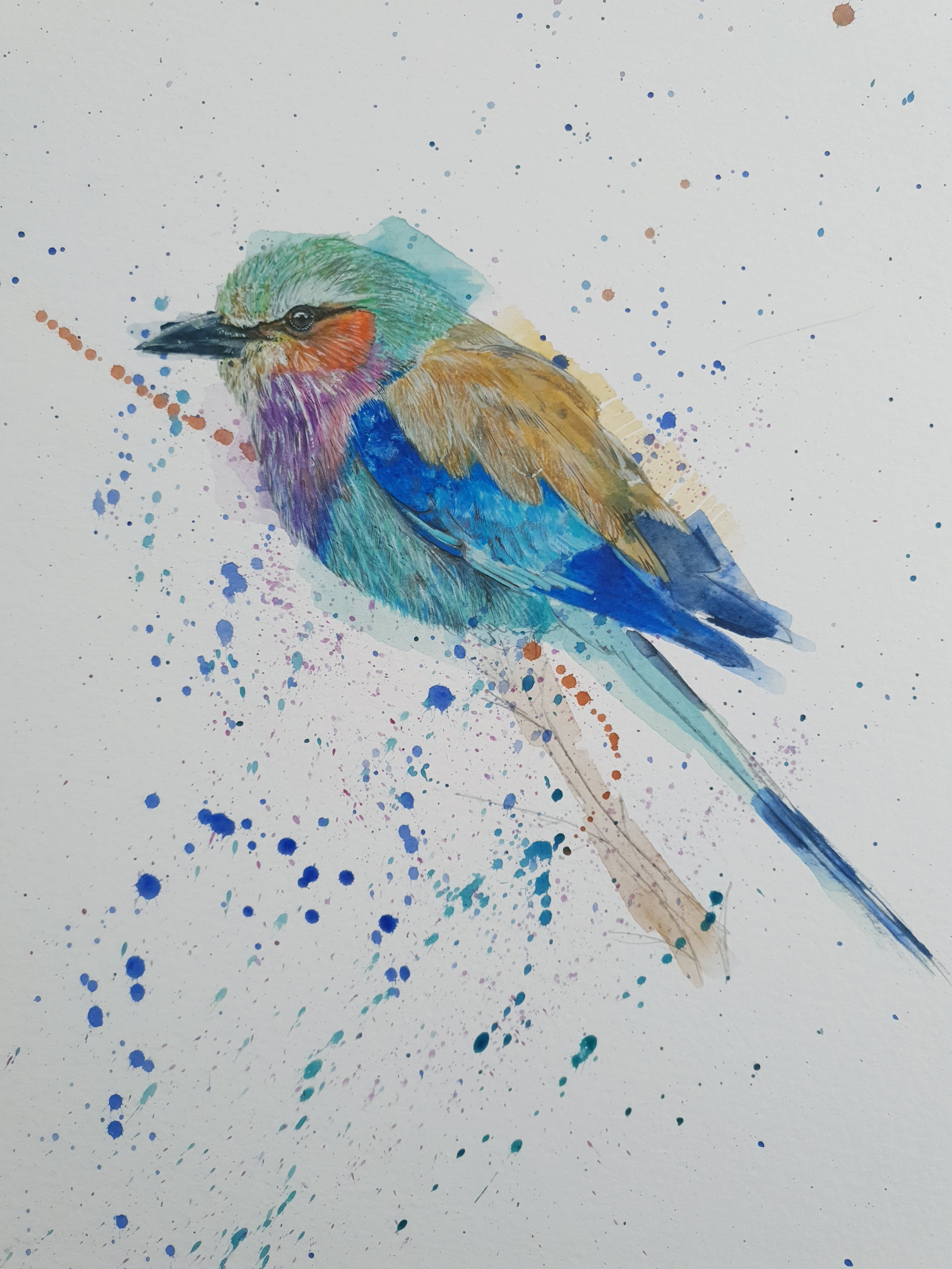 Lilac-breasted roller - stage 3