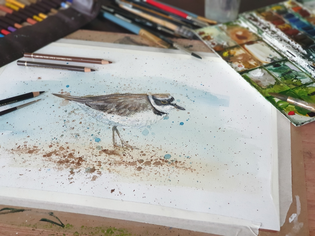 Plover work in progress